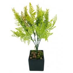 Plante Aromatique...