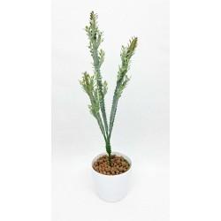 Plante Grasse-Branche de...