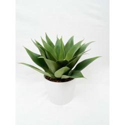 Plante Grasse-Arbuste-30-cm