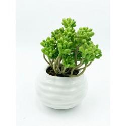 Plante Grasse-Mini...