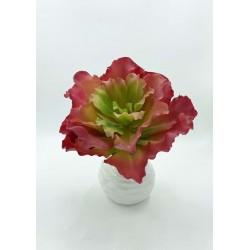 Plante Grasse-Mini Agave