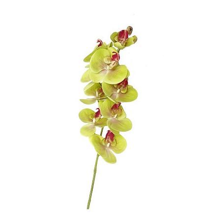 Orchidée pointée, 05 couleurs