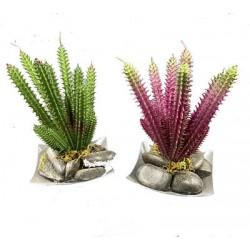 Mini Plante Grasse 1