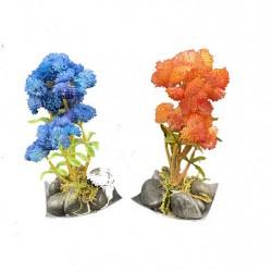 Mini Plante Grasse 2