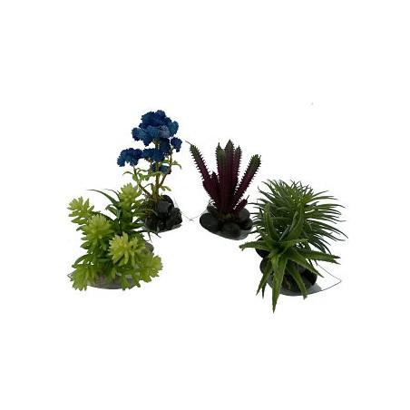 Mini Vase Plante Grasse 6