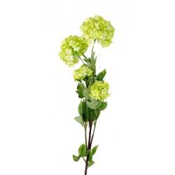 Viburnum 5 Tiges 65 cm, 03...