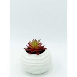 Plante Grasse-Mini Aeonium...
