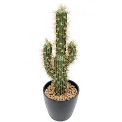 Plante Grasse-Cactus...