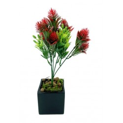 Plante Exotique-Pasiflora...