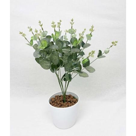 Plante Exotique-Eucalyptus...