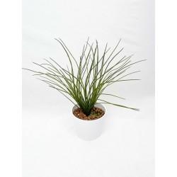 copy of Plante...